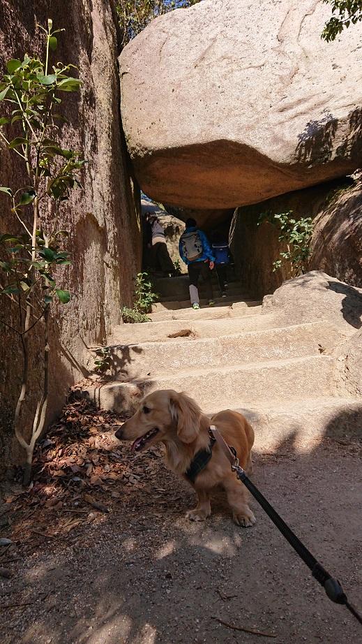 弥山登山道(紅葉谷コース) くぐり岩と犬