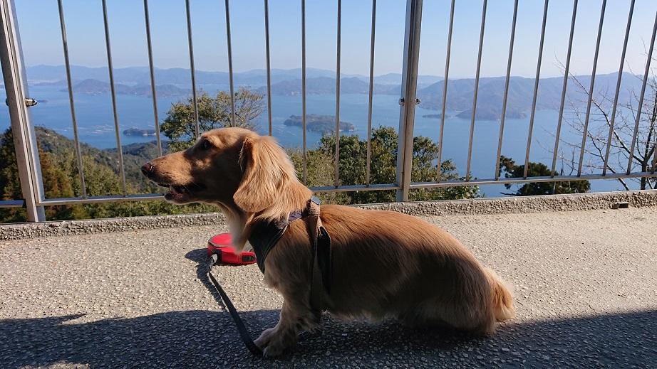 弥山展望台と犬