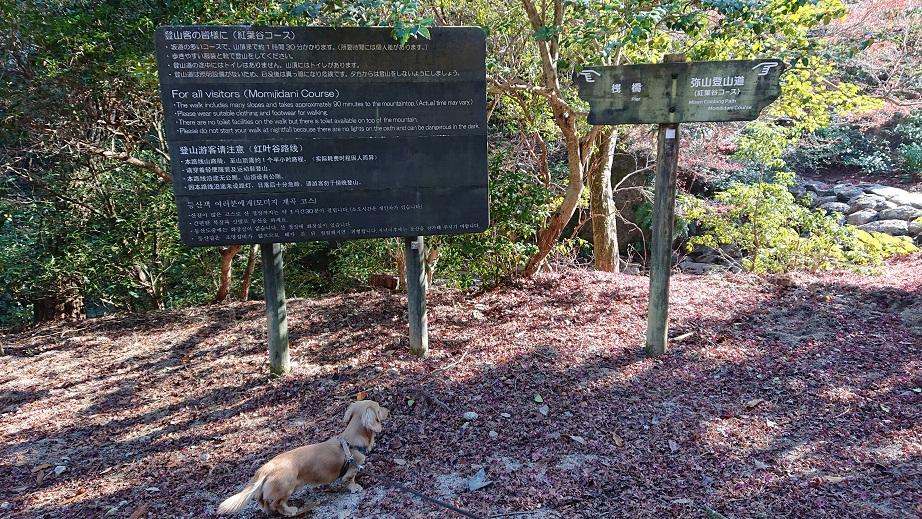 弥山登山道(紅葉谷コース) と犬