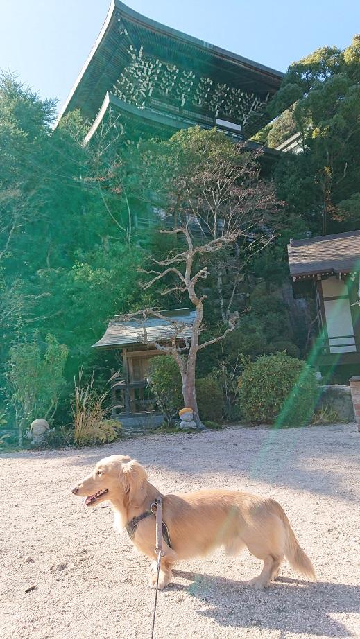 大聖院境内と犬