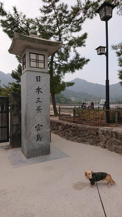 日本三景宮島と犬