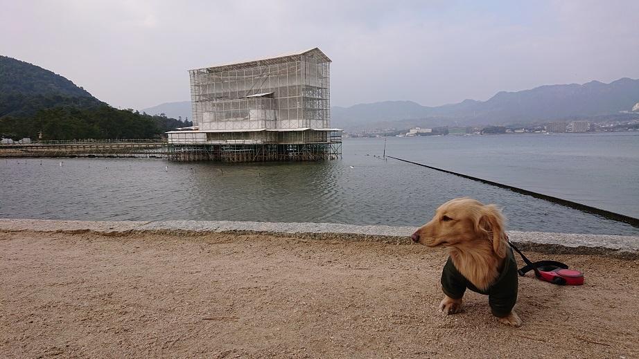 宮島の鳥居の前にいる犬