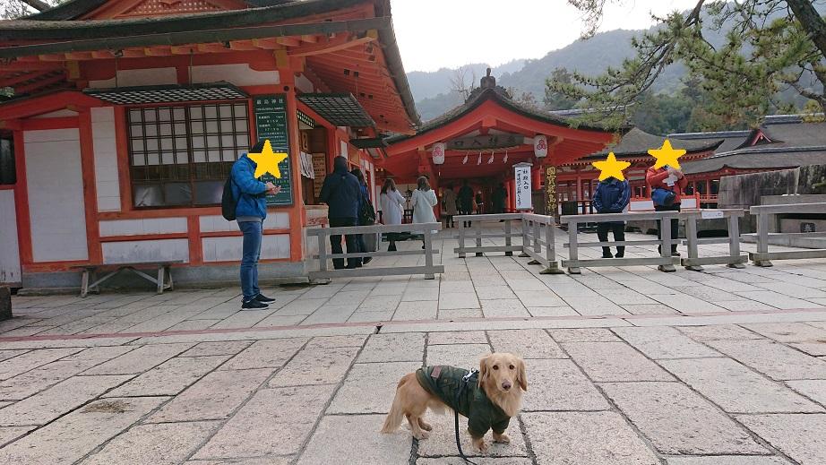 厳島神社と犬