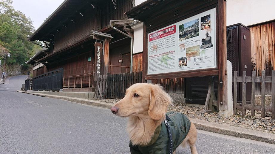 宮島歴史民俗資料館と犬
