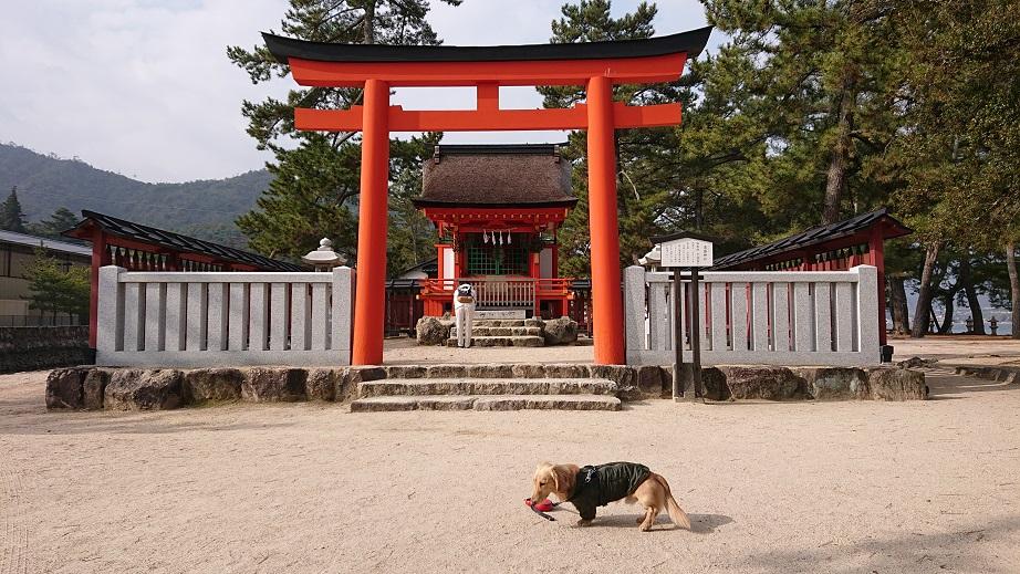 清盛神社と犬