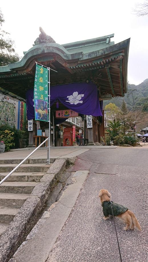 大聖院と犬