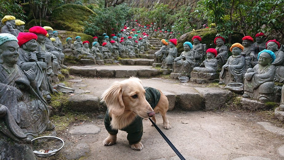 大聖院五百羅漢と犬
