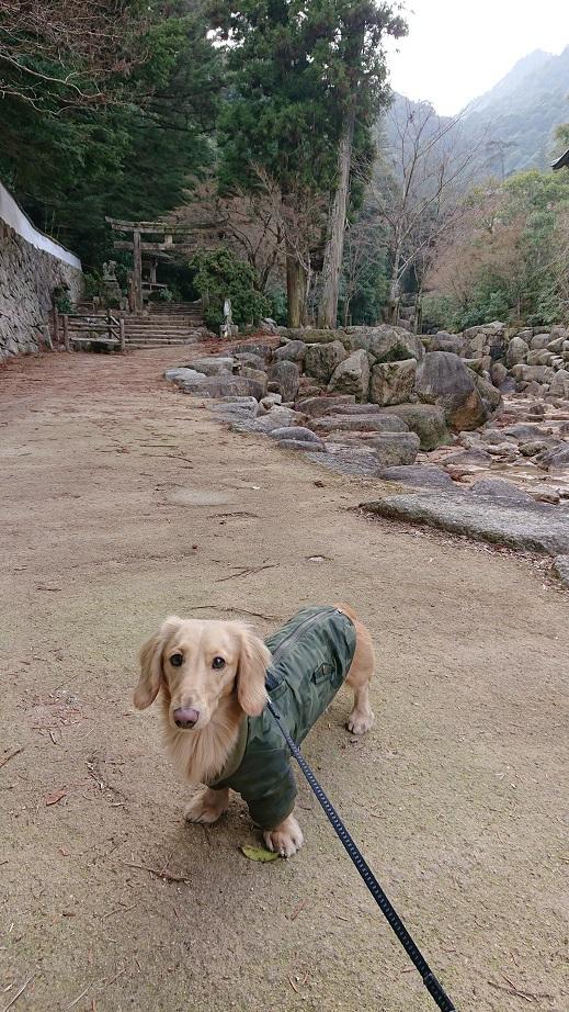 弥山登山道大聖院コースと犬