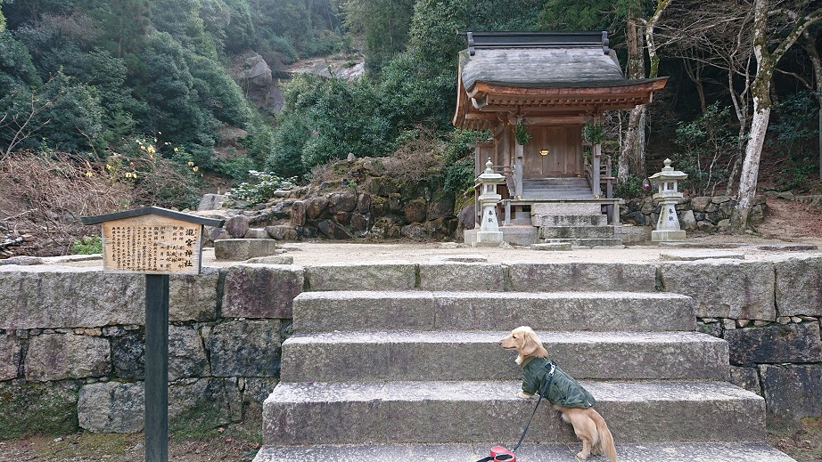 弥山登山道大聖院コース滝宮神社と犬