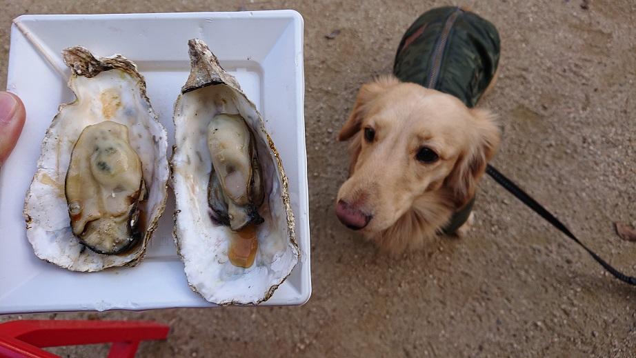宮島表参道商店街焼き牡蠣と犬