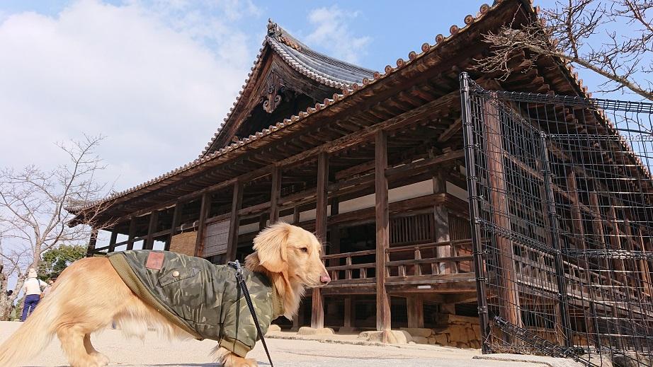 宮島豊国神社と犬