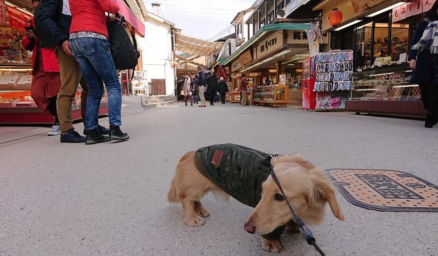 宮島表参道商店街と犬