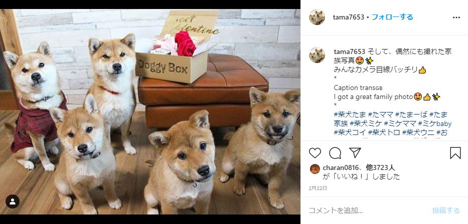 ドギーボックスと犬のインスタグラム
