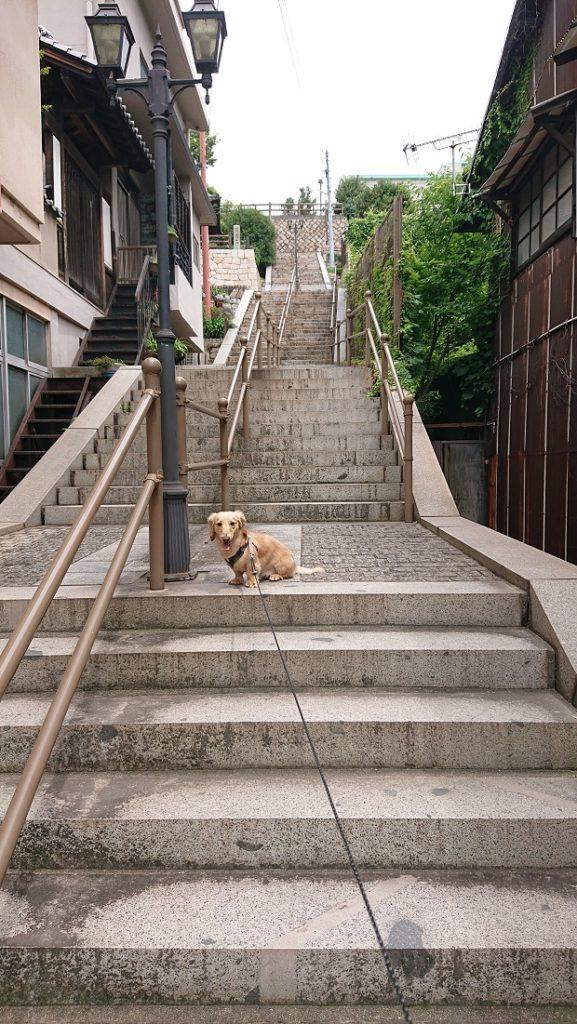 鞆の浦の階段とダックス