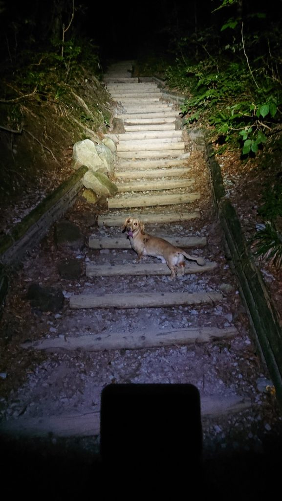 犬連れ大山登山