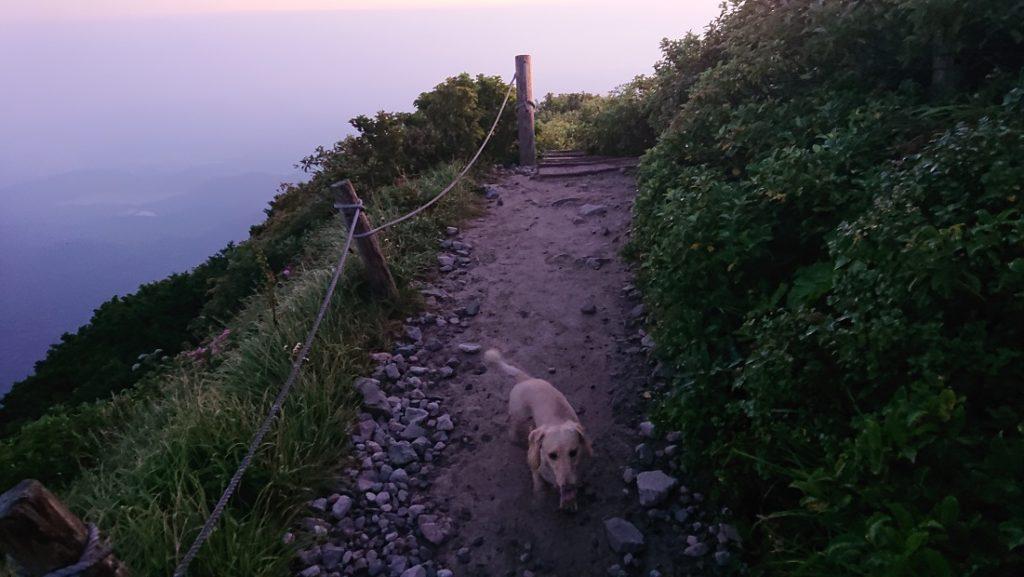 大山登山と犬