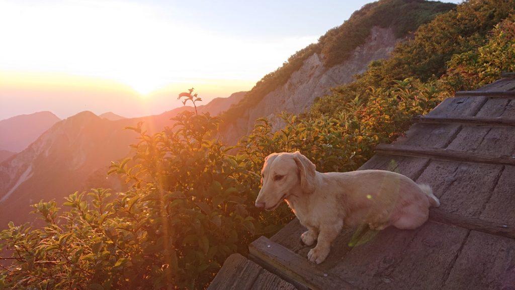 大山の夜明けと犬